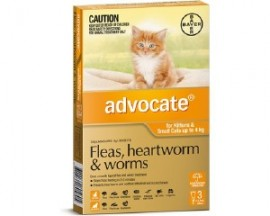 Advocate for Kittens & Cat up to 4kg