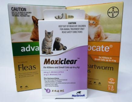 Cat Worming and Flea
